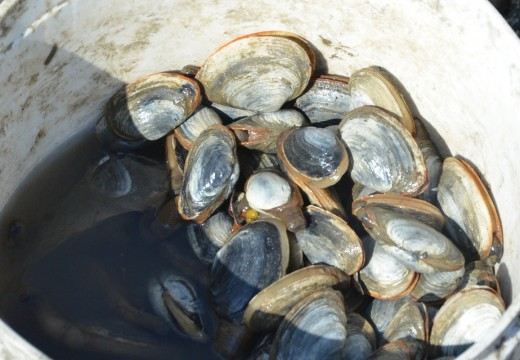 Shellfish areas open