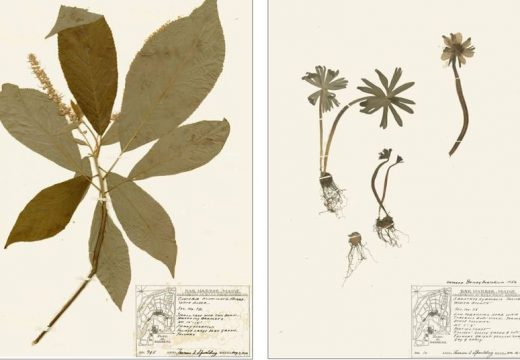 Herbarium exhibition open