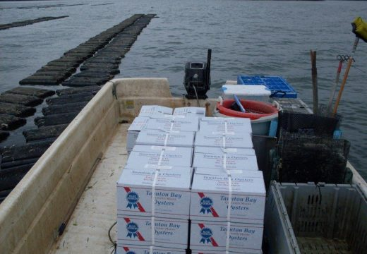 Oyster farm decision draws qualified support