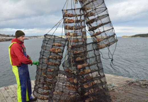 Aquaculture industry may qualify for COVID-19 relief funds